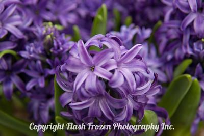 Rhine Cruise Flowers-3184