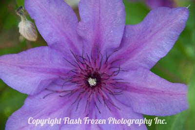 Rhine Cruise Flowers-2997