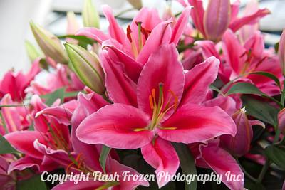 Rhine Cruise Flowers-3189