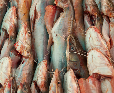 fish at the market. bangkok, thailand