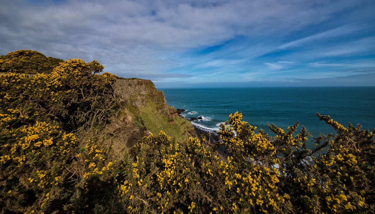 Gorse-Antrim Coast