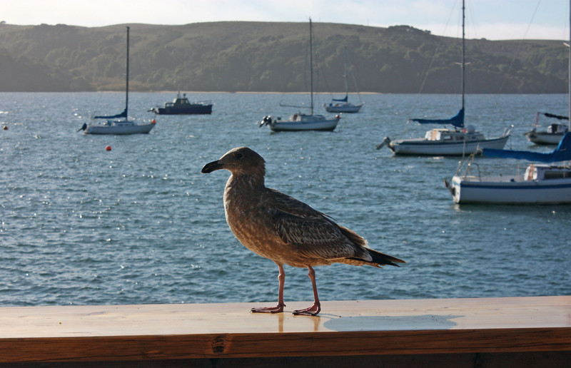 Tomales Bay, The Marshall Store