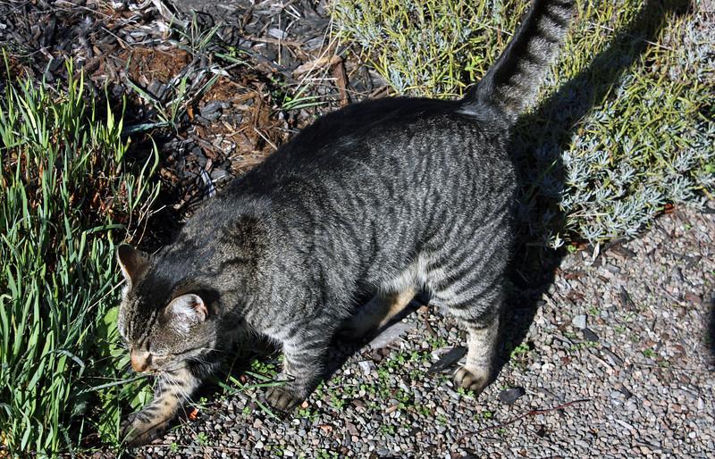 Weller House resident cat