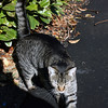 Weller House resident cat