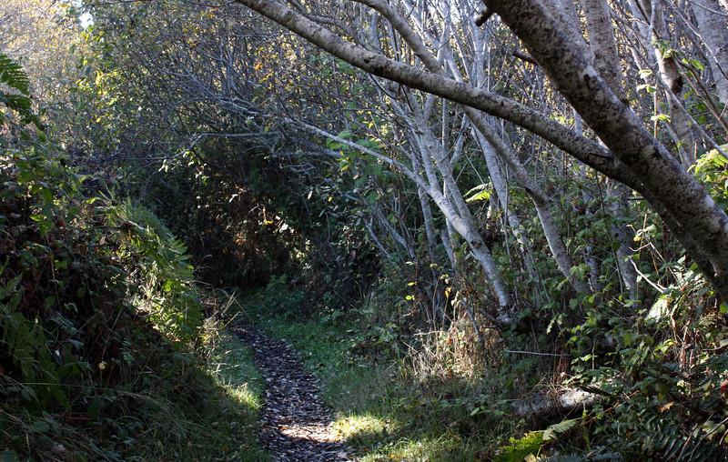 Trail around Lake Cleone