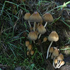Mushrooms, Lake Cleone