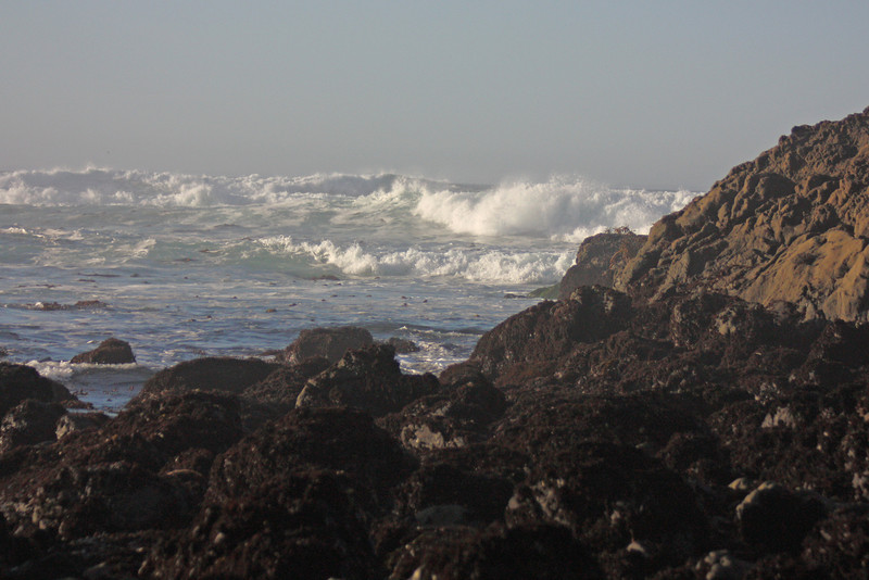 Surf by the tide pools