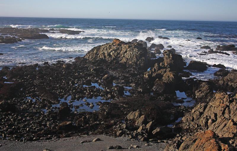 MacKerricher tide pools