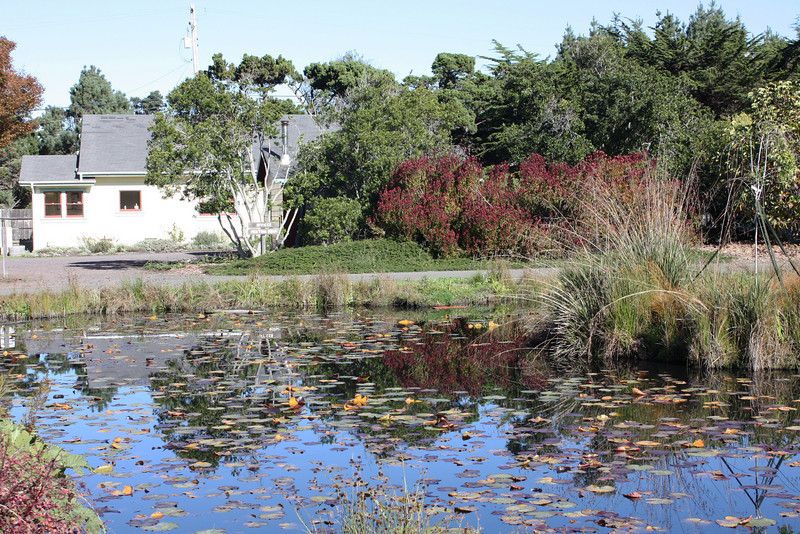 Mendocino Botanic Garden - parking lot pond