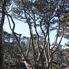 Headland behind the Botanic Garden