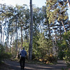 Headlands behind Mendocino Bot Garden