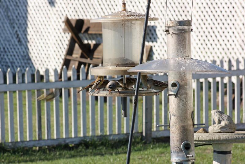 Feeding birds at Pt. Cabrillo Inn
