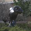 The CSU Ram