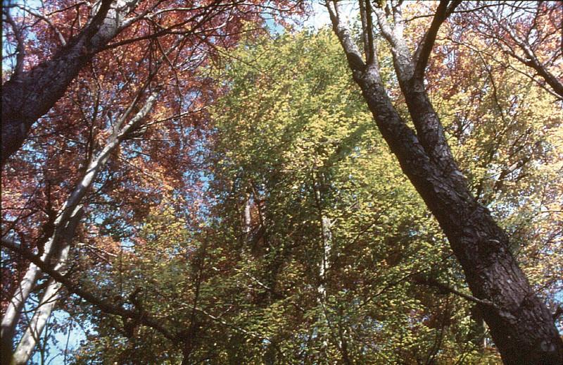 Autumn leaves Palais de Versailles France - Oct 1978