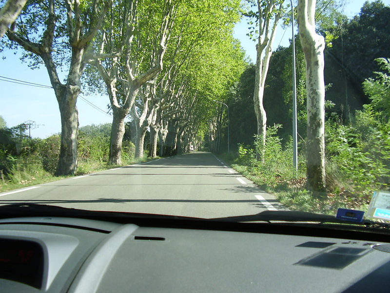 Road flanked by Plane trees near the Pont du Gard.