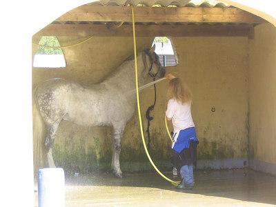"Horse show we stumbled on, riding ouru gbikes near Cadenet.  Horse ""car wash"""