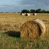 Hay fields along Normandy coast