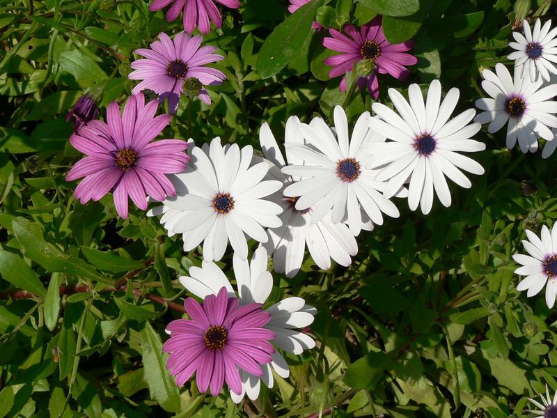 Flowers, Giardini Botanici Hanbury