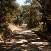 Our hot, dusty walk into town was down this road: On the island of Porquerolles, off Hyères, in southern France