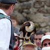 The Phantom Birds Dance at Puy de Fou. The 'specatacle' features dozens of birds of prey in an open stadium, many of which fly just over the visitors' heads.