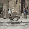 The town of Sarlat uses geese as their symbol.