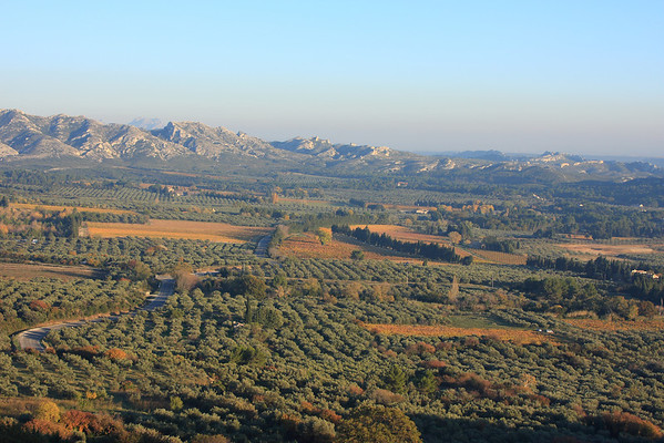 Olives and Les Alpilles