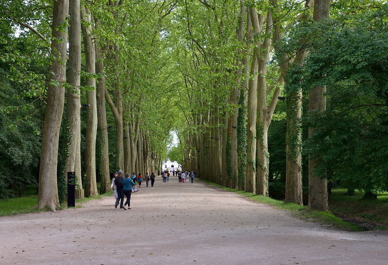 Plane trees line the avenue of approach to the Chateau Chenonceau on the Cher River in the Loire Valley.<br /> May 29. 2014 - The trees have grown since our previous visit 45 years earlier.