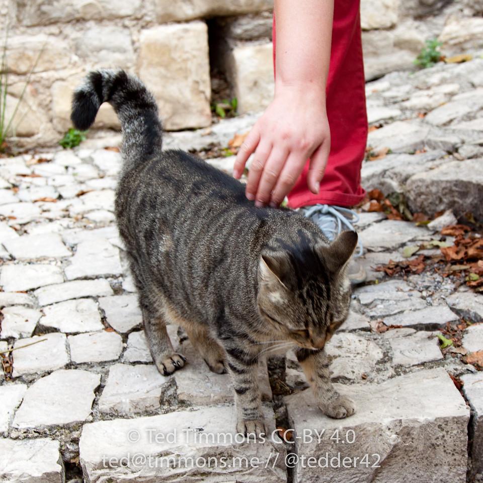 Faye petting a local cat in Seguret