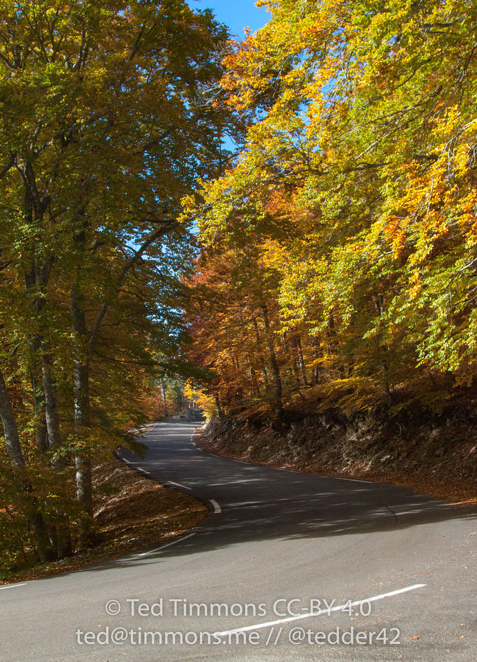 Golden leaves on the trees lining the road between Sault and Mt Ventoux.