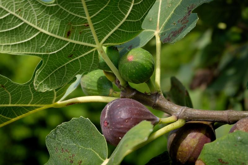 figs-1402