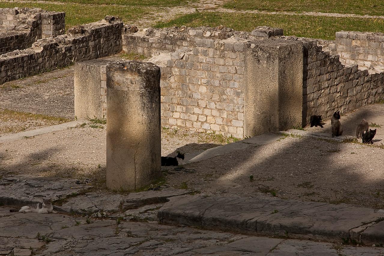 Ancient Roman cats.