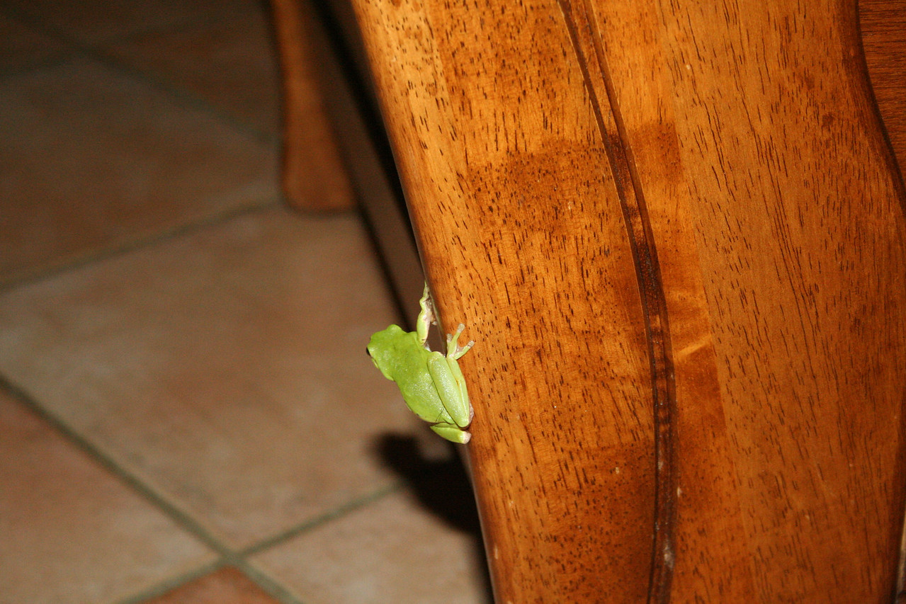 , lots of moths flying in and at one stage a little frog hopping about the living room!