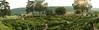Marqueyssac maze