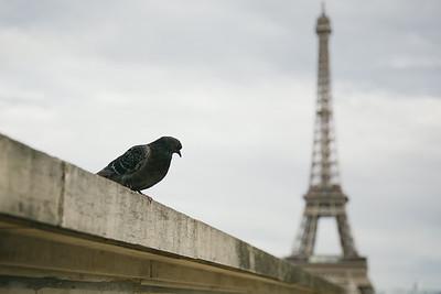 France | Days in Paris 2014