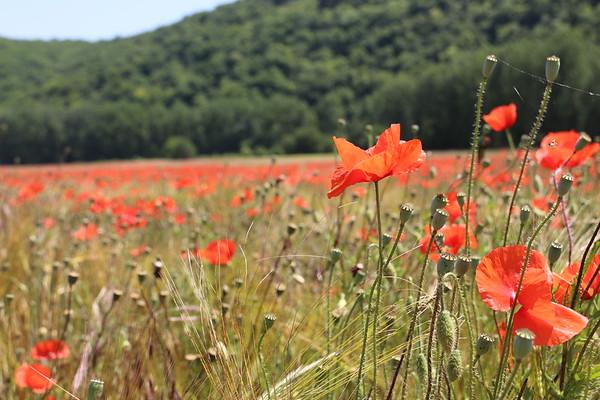 France - Dordogne