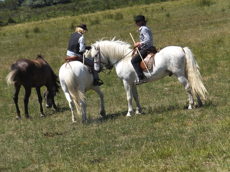 The keepers of this land and the Camargue traditions its 'gardians', akin to our cowboys. They live here with their families, often several generations together, carving out lifestyles in sync with the land.
