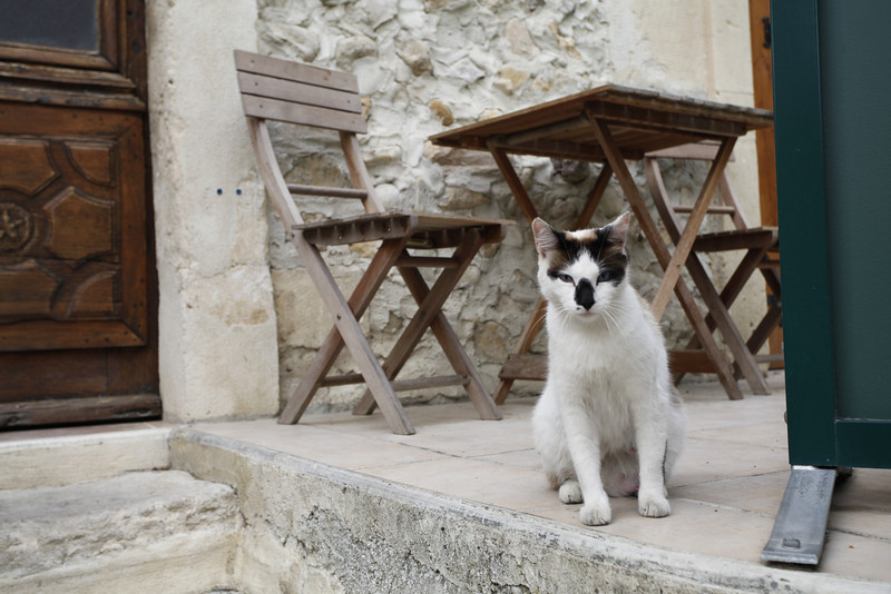 A French cat!