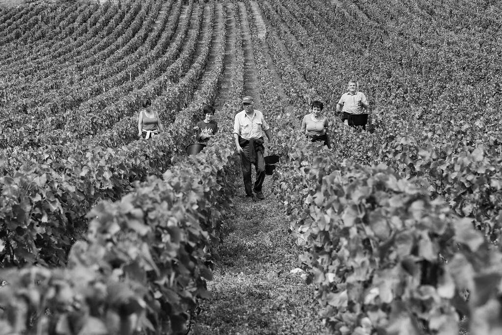 Harvesters, Burgundy, France