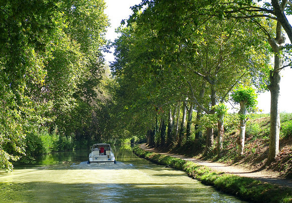 A typical stretch of the Canal. Unfortunately some of the trees are dying of a fungal root disease.