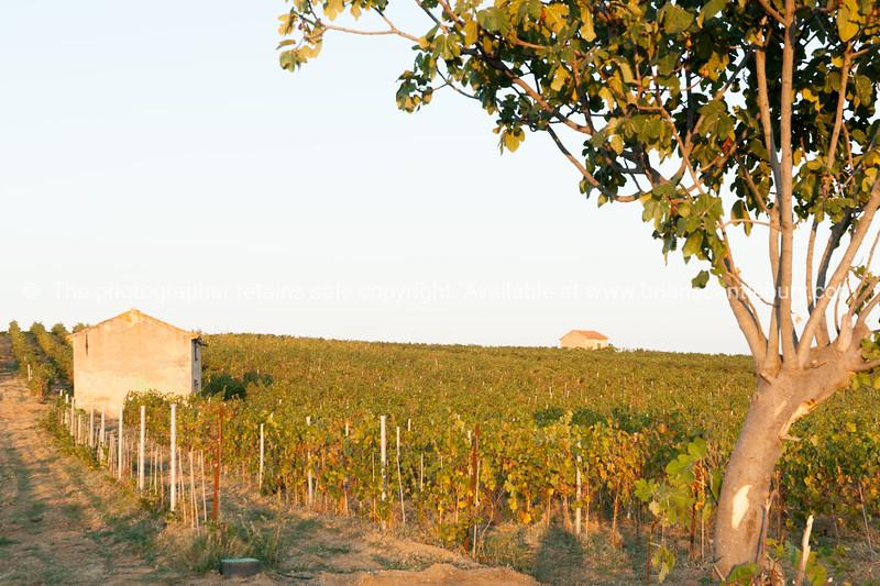 Vineyards around Cornielhan, France