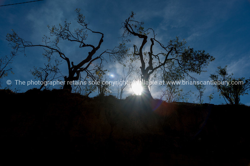 Silhouette trees on top bank baclit by morning sun.
