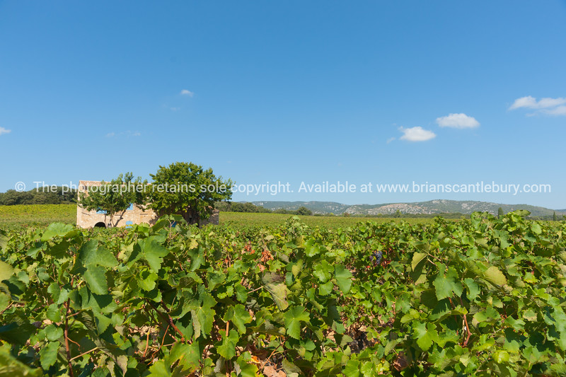 Vineyards os southern France, near Corneilhan