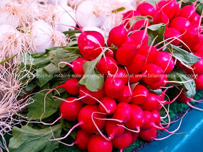 "Radishes, fresh and red, Paris Farmers market. Paris, International City. SEE ALSO:   <a href=""http://www.blurb.com/b/893039-paris-international-city"">http://www.blurb.com/b/893039-paris-international-city</a>"