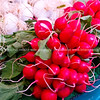 """Radishes, fresh and red, Paris Farmers market. Paris, International City. SEE ALSO:   <a href=""""http://www.blurb.com/b/893039-paris-international-city"""">http://www.blurb.com/b/893039-paris-international-city</a>"""
