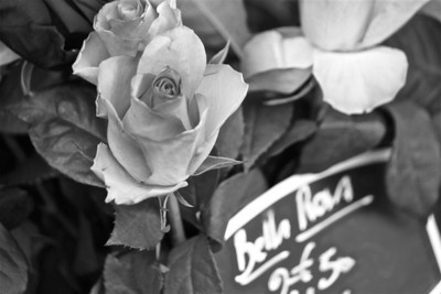 Roses at Les Halles, Avignon, France.