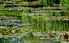 Waterlilies at Giverny