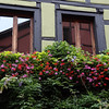 Kayserberg, window boxes