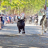 An evening stroll in Sommières in Southern France may be interrupted by the odd bull and Gardiens (horesemen/women)