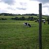 Prados en Beaune le Froid, donde las vacas SALERS pastan para dar los tres quesos St. Nectaire que nos trajimos a España.