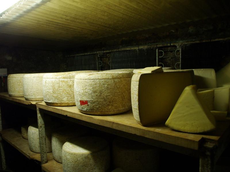 Queso Cantal y Salers (40 kg) en una granja de la región.